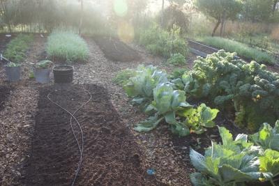 Composted garden beds, S garden
