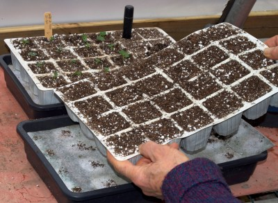 Pricking out containers