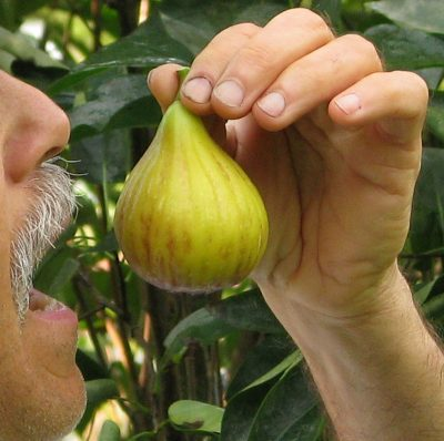 Me eating a fig