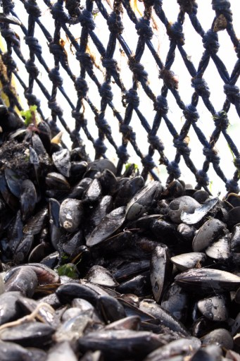 breed opening mosselseizoen mosselen zeeland zeeuwse mosselen leesvoer (3 of 4)