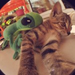 Yoko le chat et son margouillat L'effet Péi
