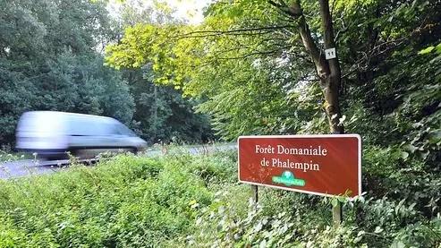 La macabre découverte aurait été faite en forêt de Phalempin.