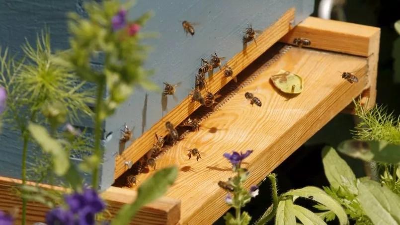 La mortalité des abeilles, attribuée à l'usage immodéré de pesticides, a atteint des taux effrayants ces dernières années.