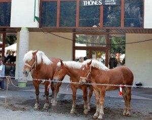 Horses enjoy la foire de la Saint Maurice