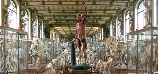 <Photo of an anatomical man at the Natural History Museum of Paris. Copyright LeFrancoPhoney France, based in La Clusaz, Haute Savoie>