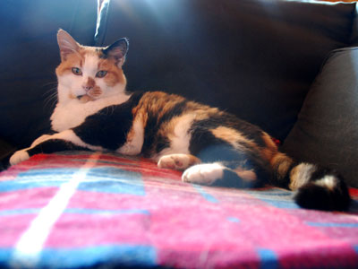 <Photo of Pantoufle the cat>