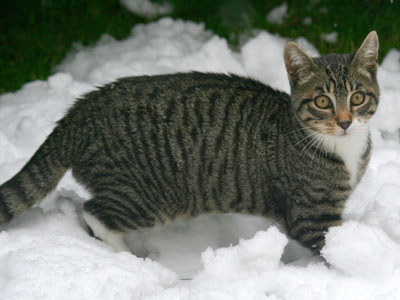 <Photo of Squeak the kitten and his first snow experience>