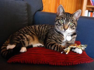 <Photo of a French kitten (Squeak) in St Jean de Sixt>