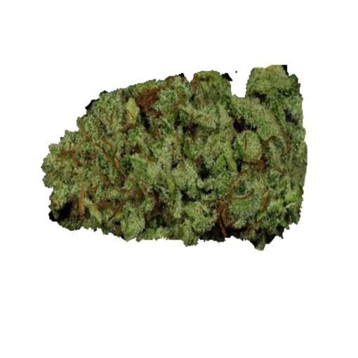 order G13 cannabis strain online