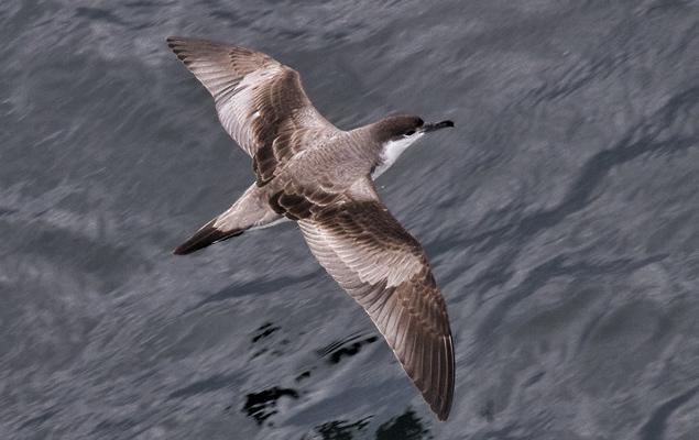 ID.bird