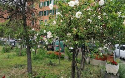 Primavera al roseto e al giardino giapponese