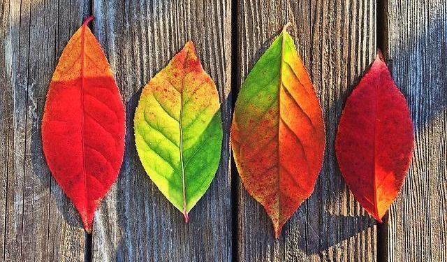 Wir wünschen schöne Herbstferien!