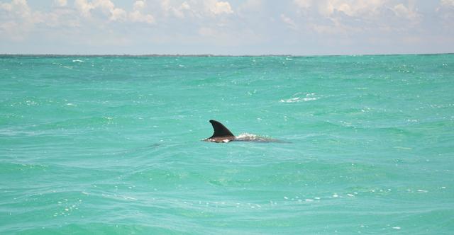Delfines en Punta Allen sian ka'an
