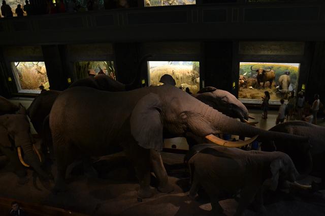 Museo de Historia New York animales
