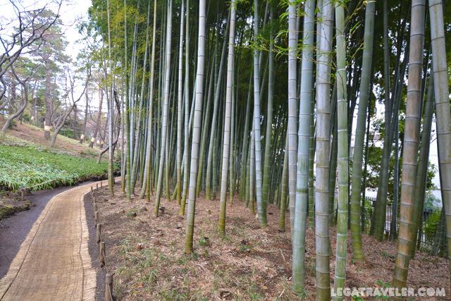 típico jardín japonés tonogayato tokyo