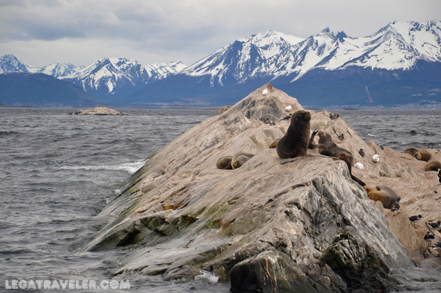 avistamiento fauna canal beagle ushuaia