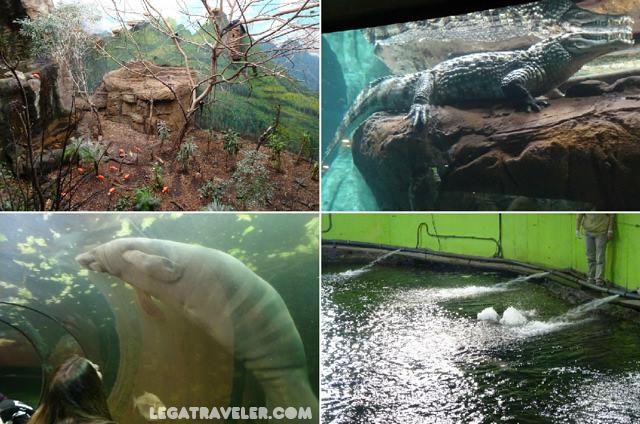 la-jungla-acuario-faunia