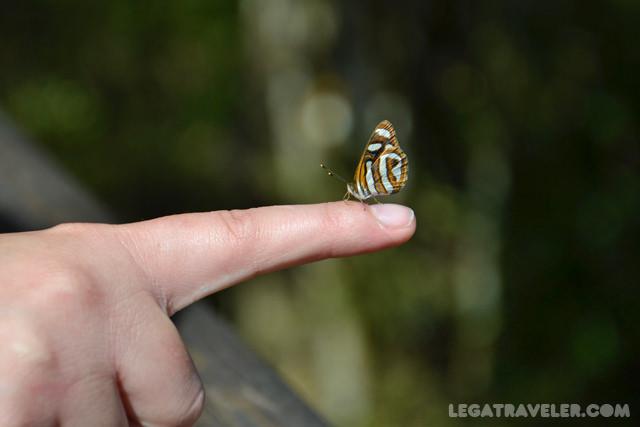 mariposas iguazu