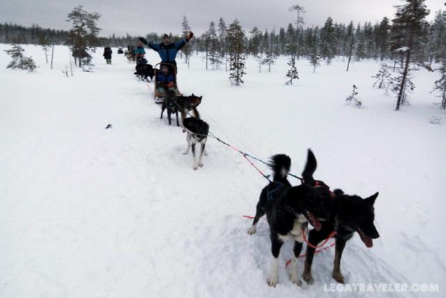 granja-huskies-rovaniemi-bearhill
