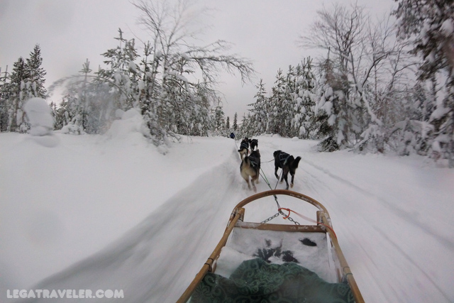 trineo-huskies-laponia-finlandia