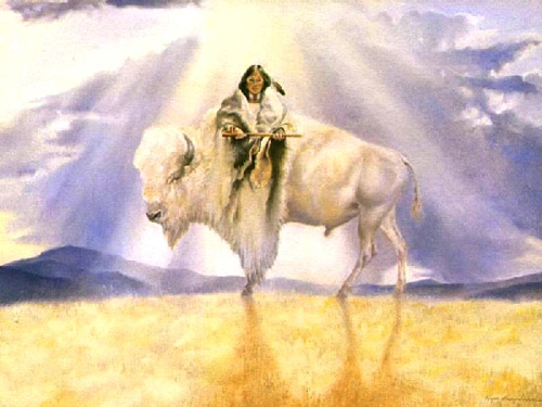 Image result for white buffalo
