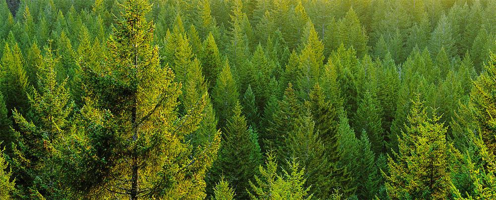 legno-eco-sostenibile