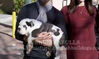 Joe Jonas Ashley Greene chien Photo