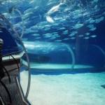 Plonger à l'Aquarium Océanographique de Shanghai