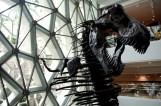 GrandBondMilieu_Musee_histoire_naturelle_Shanghai