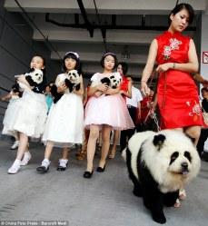 MarketingChine_chien-chine