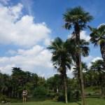 Jardin botanique de Shanghai : le Grand Vert