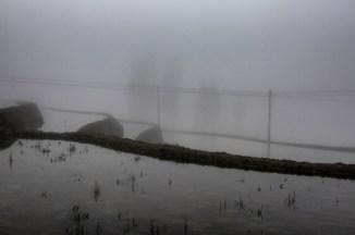 Rizières dans la brume