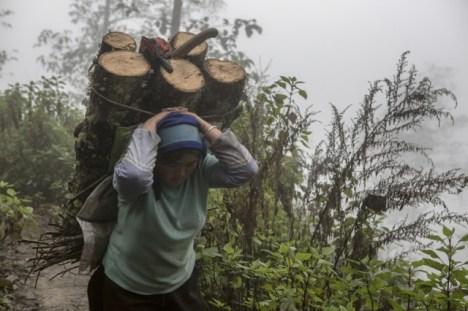 Portage de bois dans la montagne