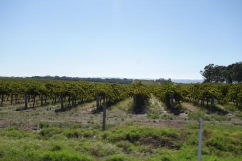 Région des vins - Wine region