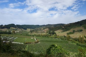 Vignes et vergers - Vineyard and orchards