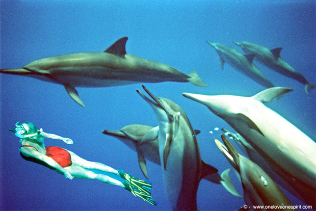 nager avec dauphins