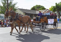 Grand marshal Bert and Taunya Wilson are honored in the all-horse parade. | Nicole Kunze