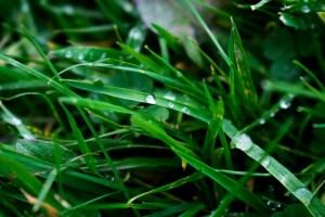 eco-friendly planting