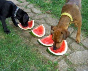 watermelon_dogs