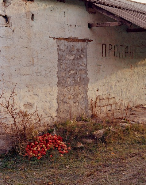 Apples stored outside of a ruin, 2015