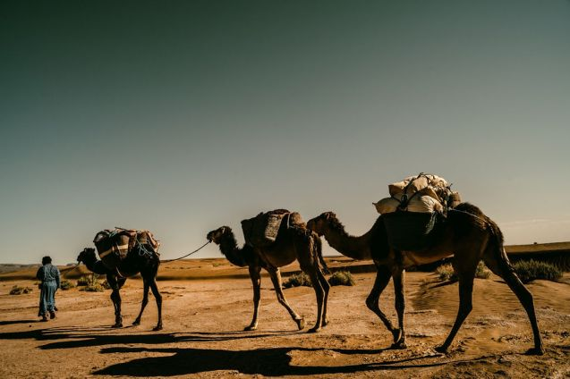 Xiomara Bender: Omar, Karawane, Sahara, Südlich der Oasenstadt M'Hamid © Xiomara Bender