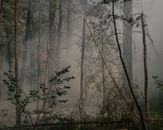 Forest wildfires are daily occurrences – here, close to the town of Minusinsk