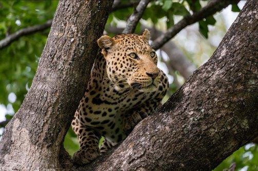 LFI_Botswana_2020©MarcStickler-12