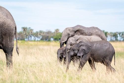 LFI_Botswana_2020©MarcStickler-2