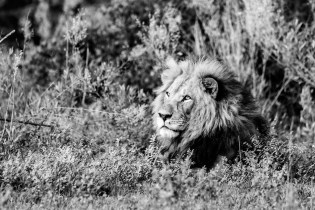 LFI_Botswana_2020©MarcStickler-3