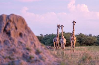 LFI_Botswana_2020©MarcStickler-5