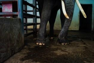 Elephant, Samut Prakan
