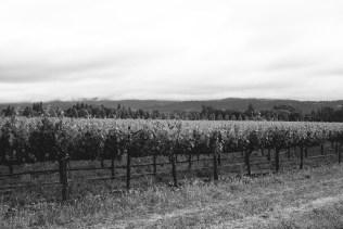 merlot-vineyard-wine-country