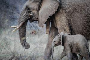 Olifant-voorbeeld-geven-casey-allen