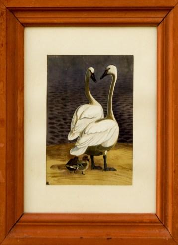 Svaner, Krikænder, 15x18 cm